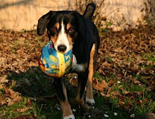 Rassebeschreibungen für Hunde