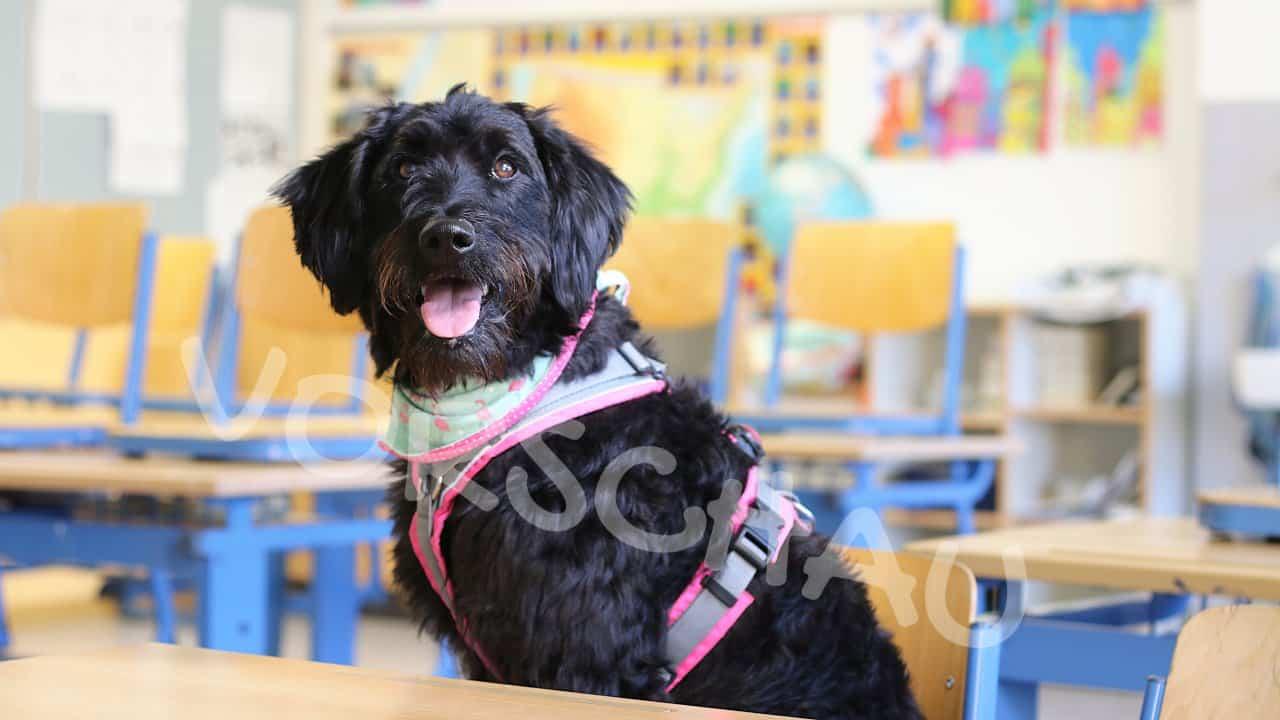 Schulhunde: Gewöhnung an die Schule - Hey-Fiffi.com