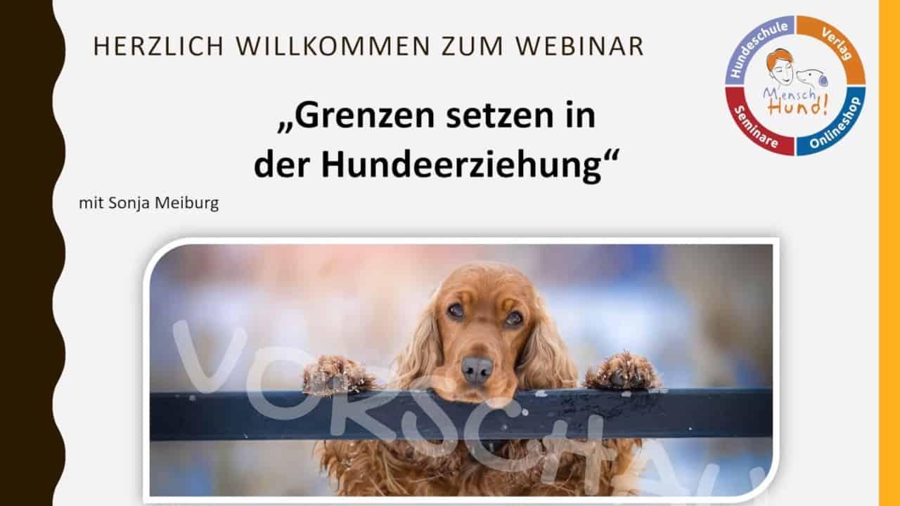 Hunden Genzen setzen - Hey-Fiffi.com