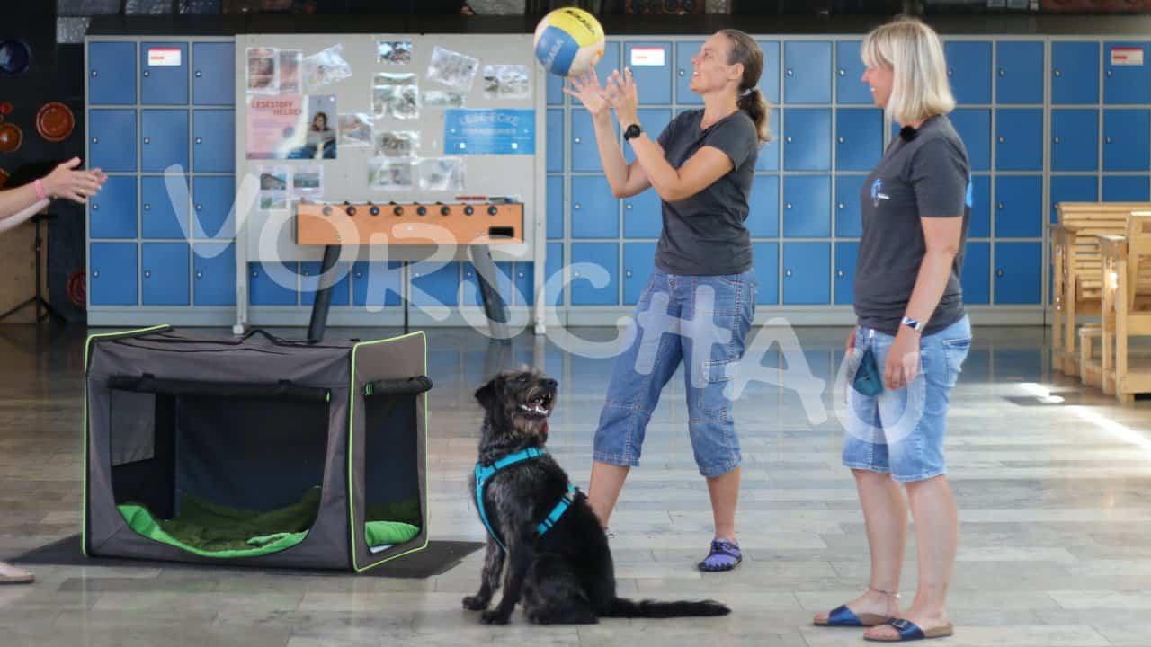 Der Schulhund: Deckentraining unter Ablenkung - Hey-Fiffi.com