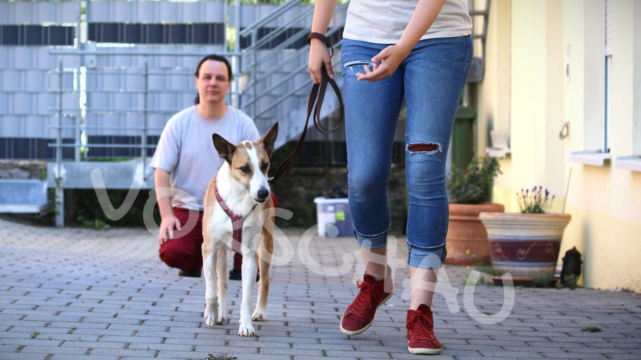 Gangbildanalyse beim Hund -Hey-Fiffi.com