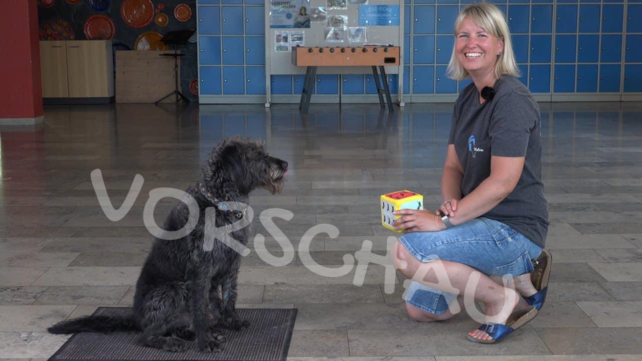 """Der Schulhund: Trick """"Würfeln"""" - Hey-Fiffi.com"""