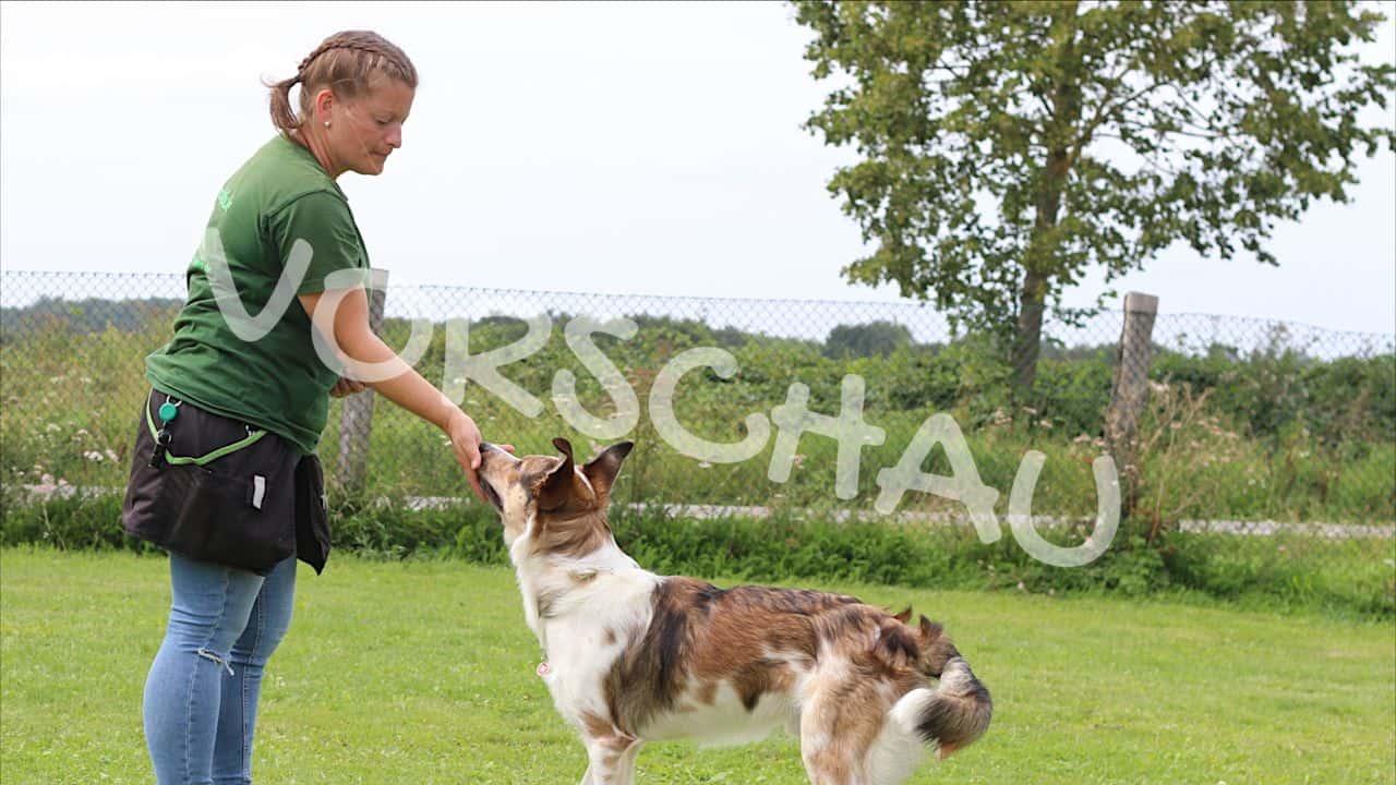 Die Klebenase - Hey-Fiffi.com