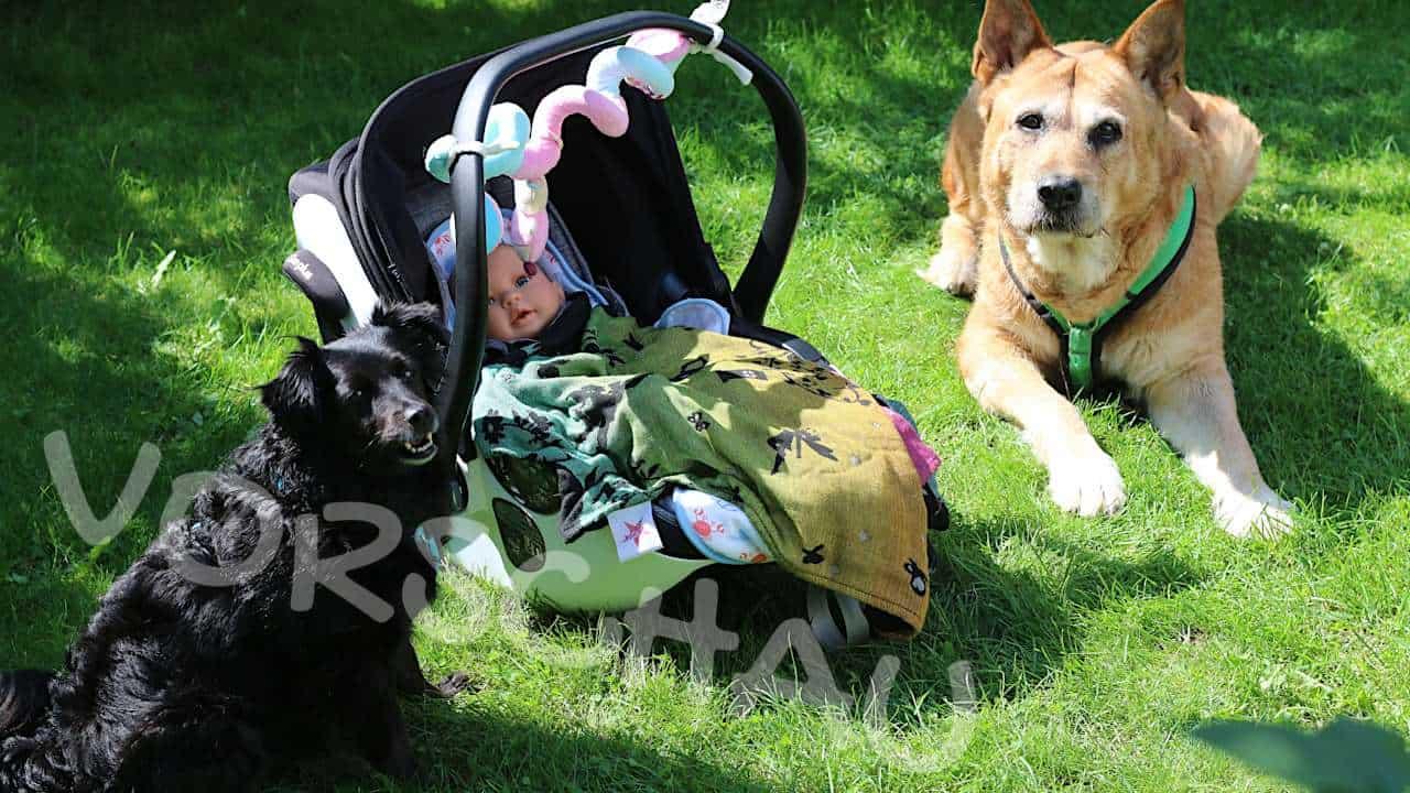 Kind und Hund: Erste Begegnung - Hey-Fiffi.com