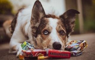 Hund Silvesterknaller, Foto Janna Martha Müller - Hey-Fiffi.com