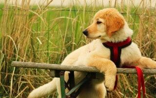 Hund, Lara Meiburg Photographie