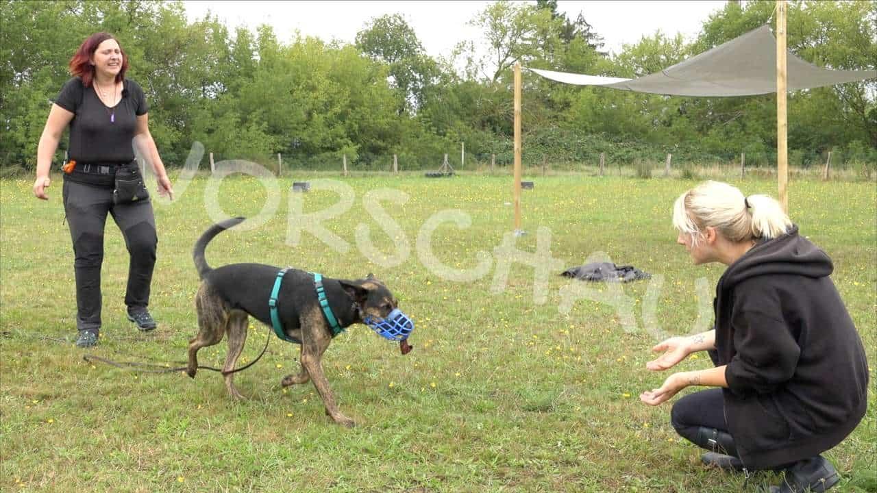 Beschäftigung für Hunde mit Maulkorb - Hey-Fiffi.com