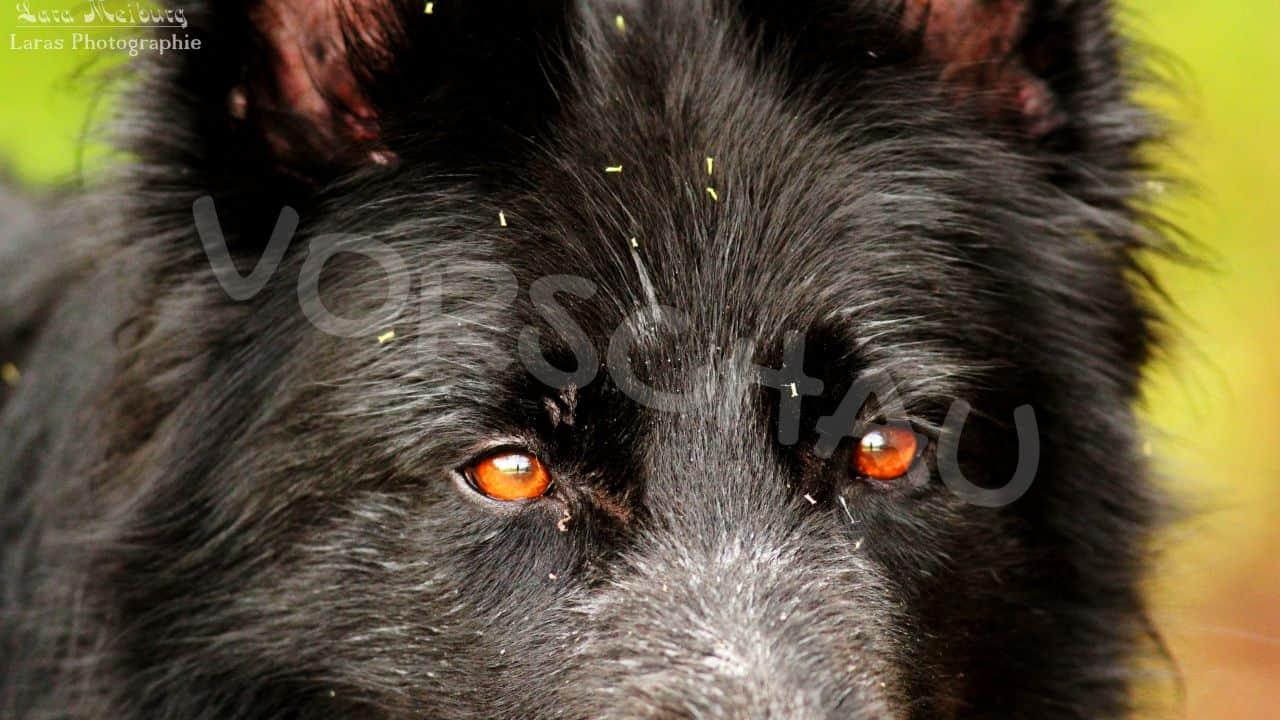 Lara Meiburg Photographie Hund -Hey-Fiffi.com