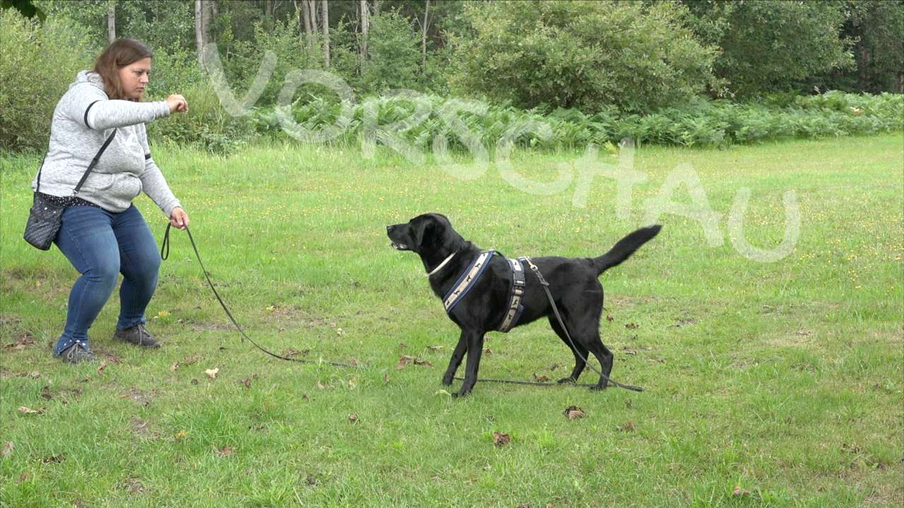 Das Lauerspiel für Hunde - Hey-Fiffi.com