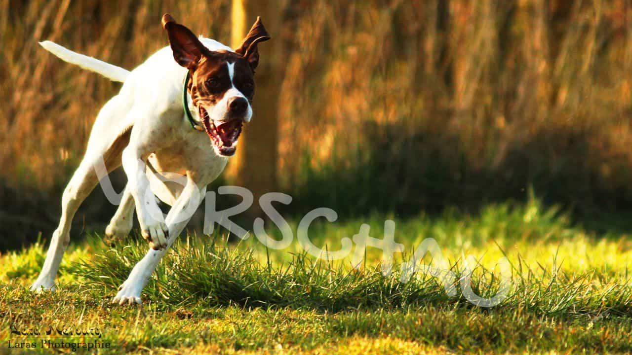 Lara Meiburg Photographie, Hund - Hey-Fiffi.com